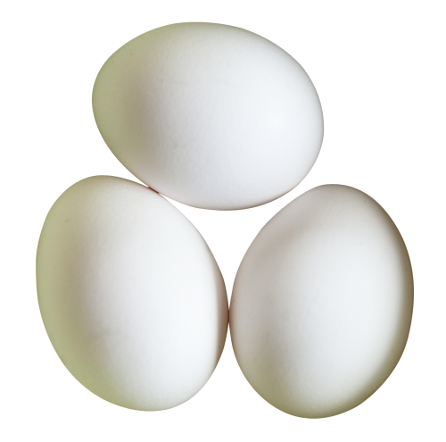 two eggs png