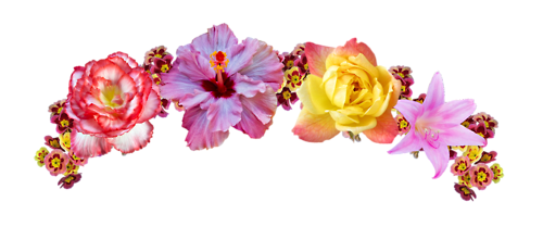 Google search my fandoms. 2ds transparent flower crown png free