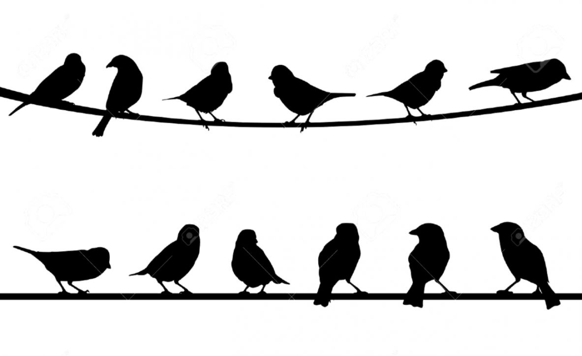 3 birds on a wire. Two silhouette this wallpapers