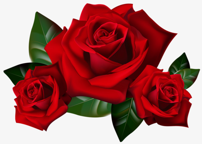 3 clipart rose. Three roses red flowers