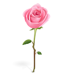 3 clipart rose. Pink free cliparts