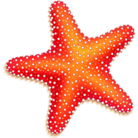Download free png photo. 3 clipart starfish clip art stock