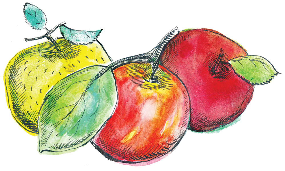 3 drawing fruit. Harvest of the month