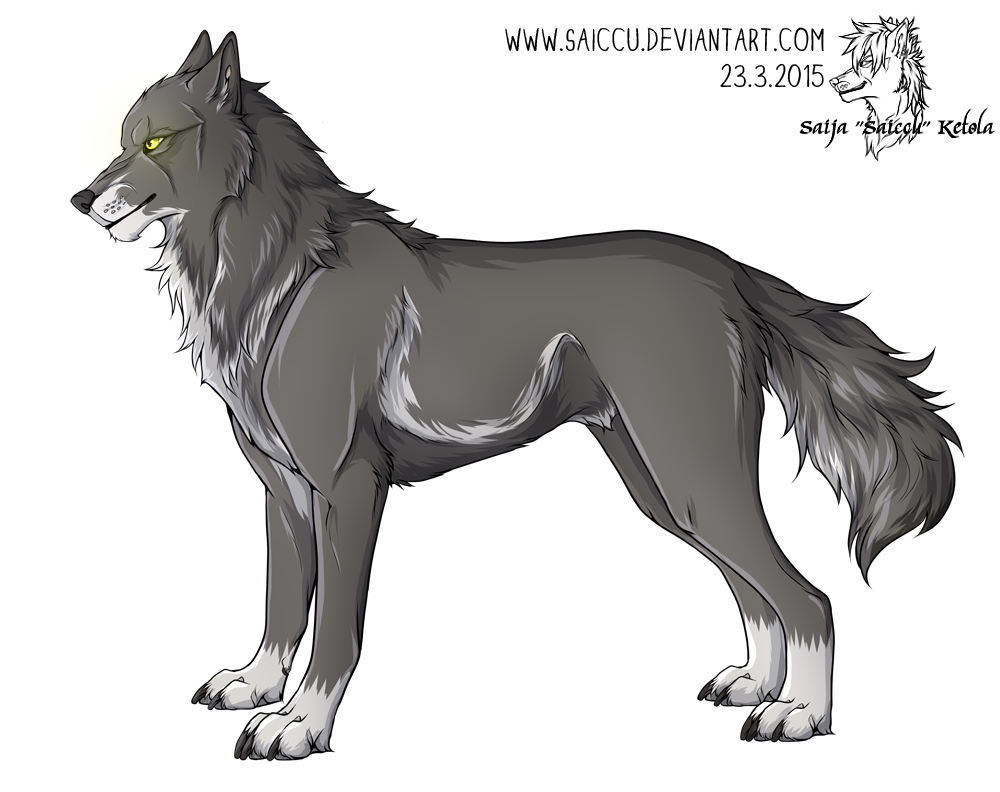 Drawing wolfs profile. Picture of mikael as