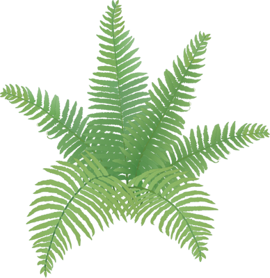 3 vector fern tree. Simple drawing at getdrawings