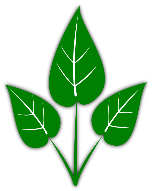 3 vector leaf. Free leaves clipart graphics
