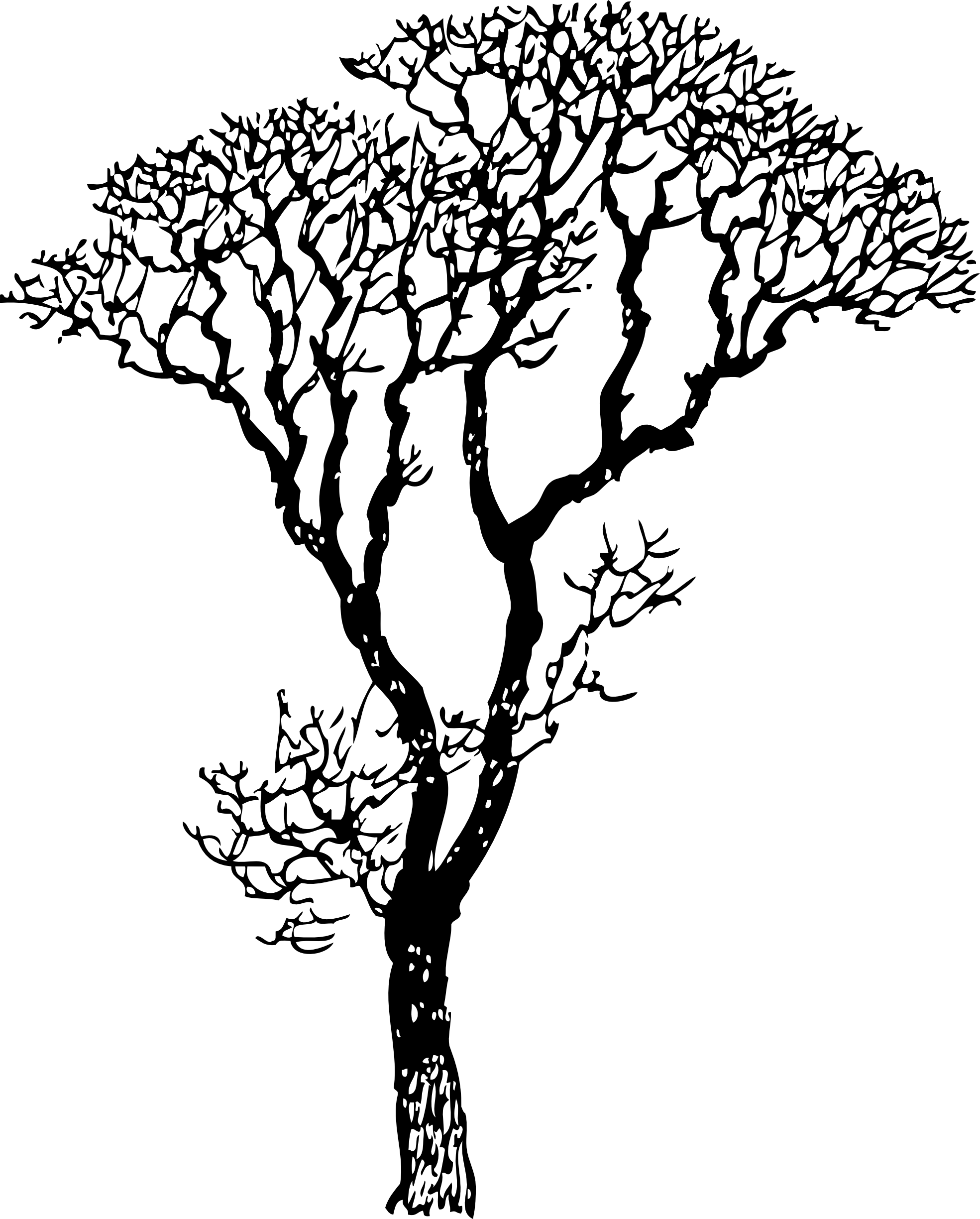 3 vector nature tree. Bare black white line