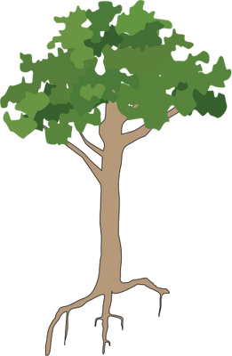 3 vector rainforest tree. Trees drawing at getdrawings