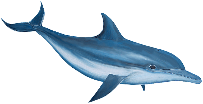 3d dolphin png. Free transparent files and