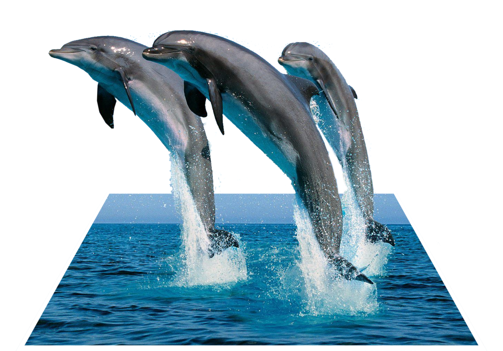 3d dolphin png. Pop out d effect