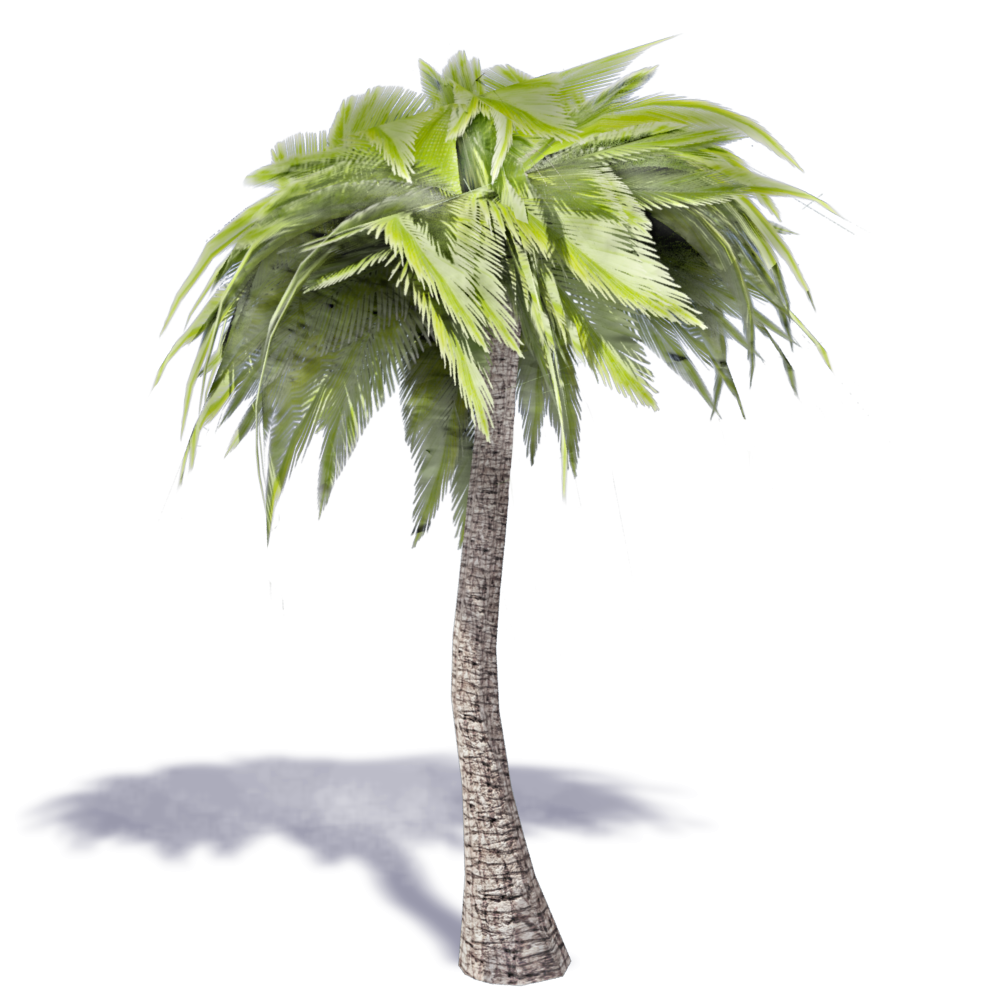 3d Palm Tree Transparent & PNG Clipart Free Download - YA-webdesign