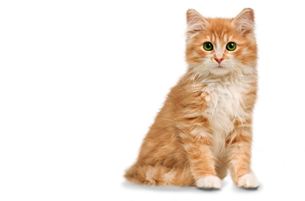 cute cat png