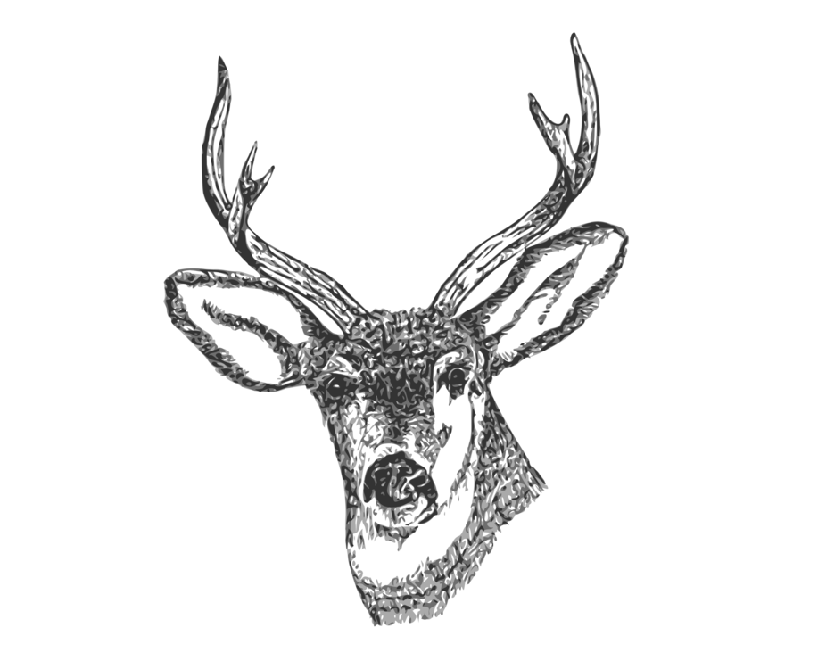 Deer pencil antler curtain. Dear drawing pen image library download