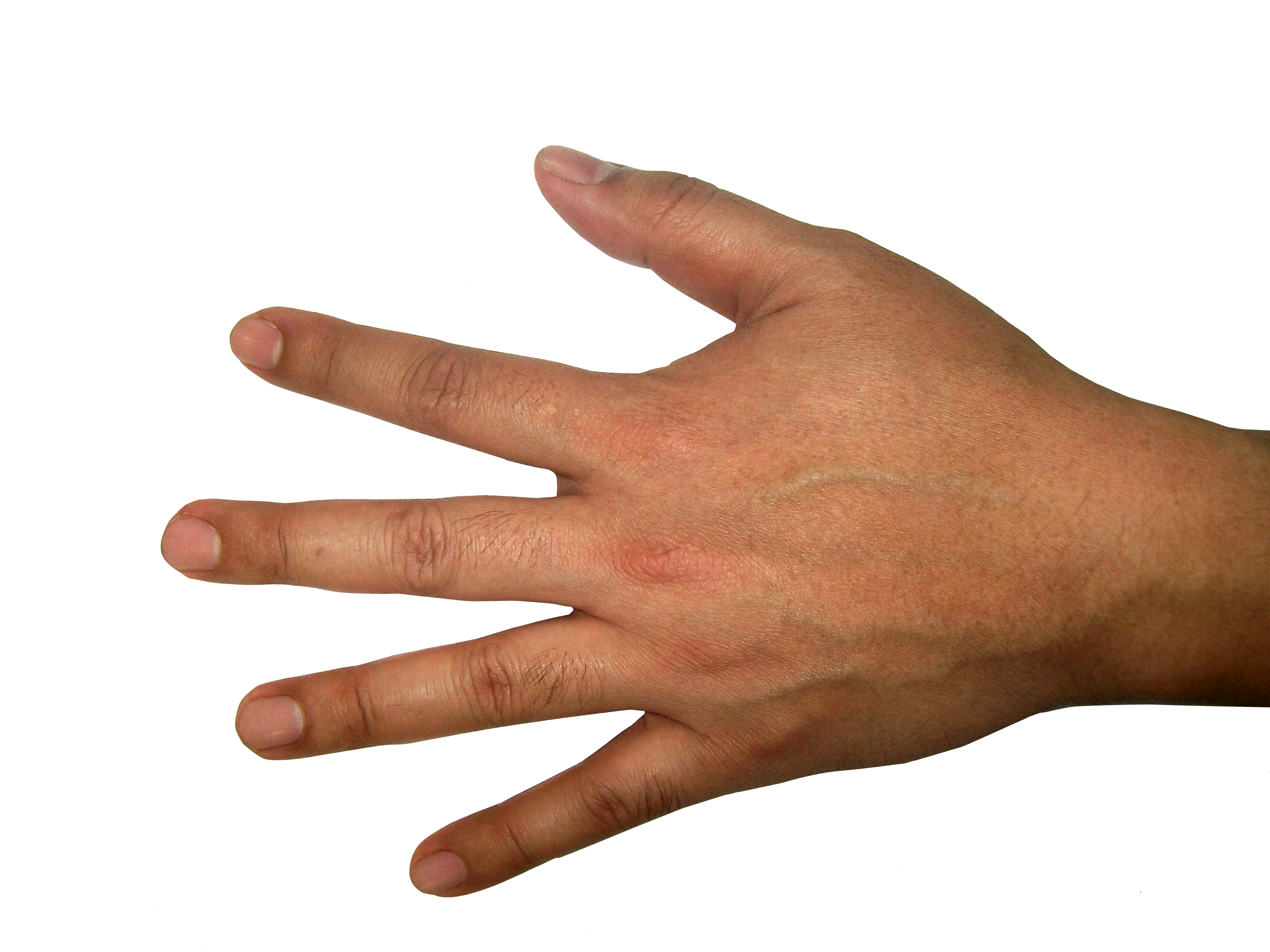 Open palm png. Five finger hand image