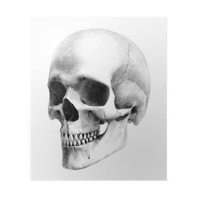 Academic drawing skull. Human view pencil style