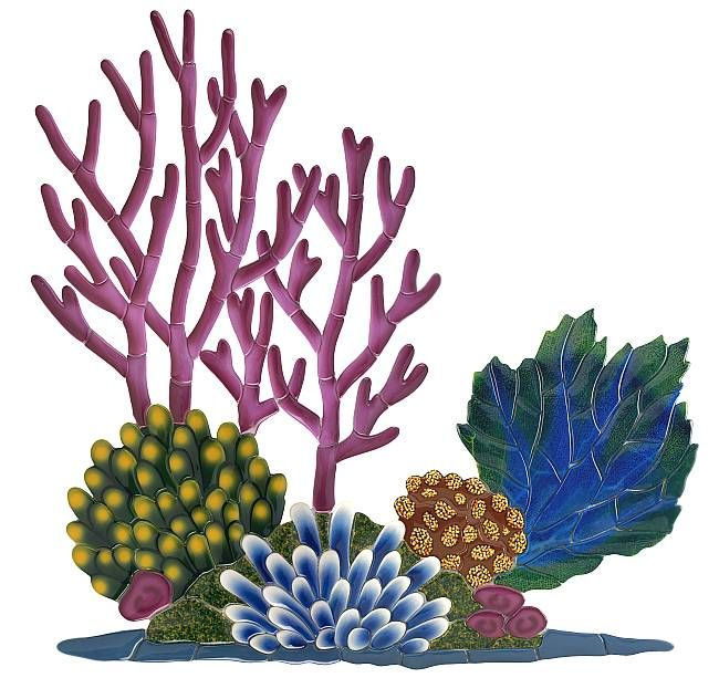 accents clipart reef
