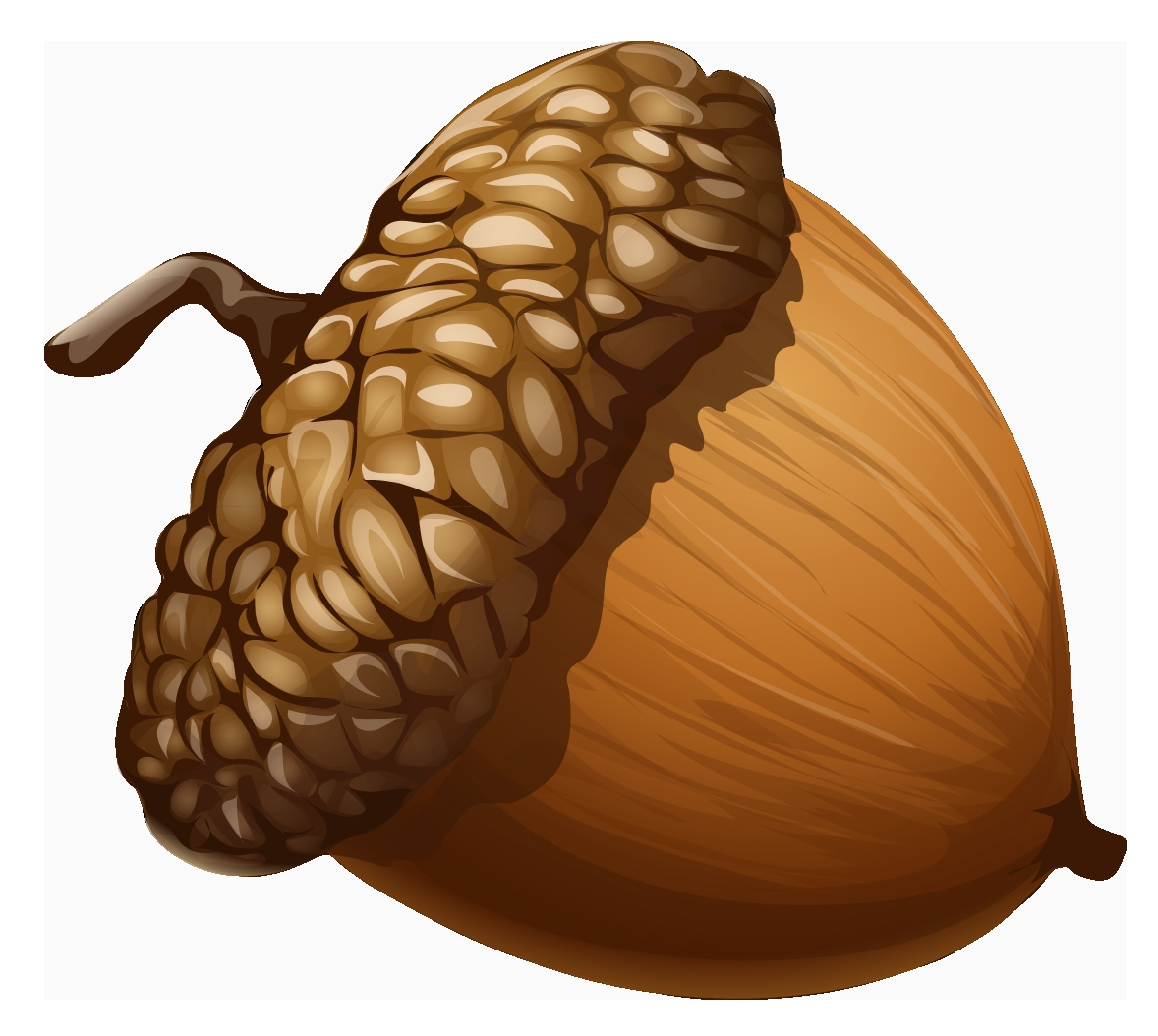 Acorn clipart. Awesome gallery digital collection