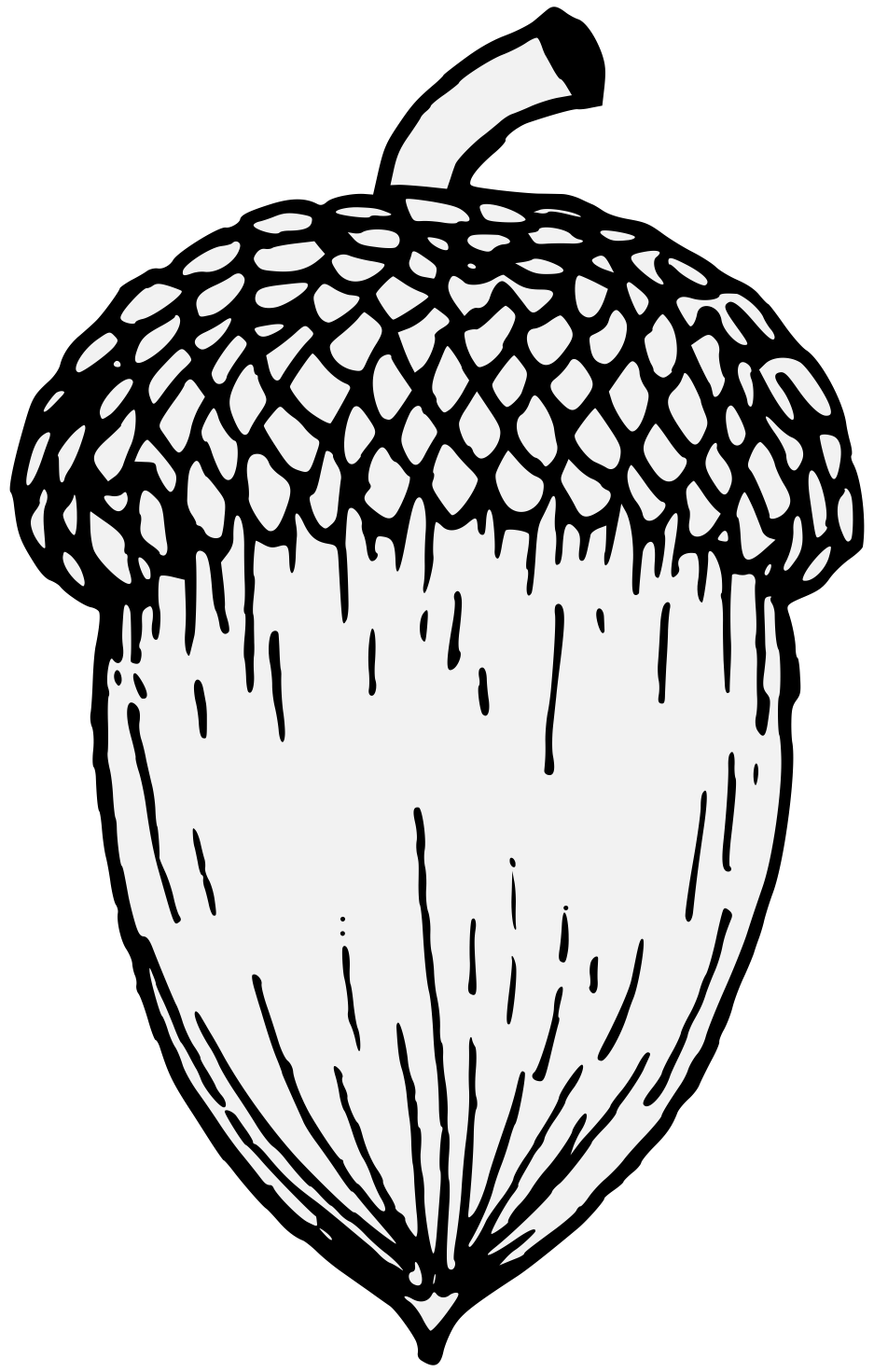 Acorn svg white. Oak traceable heraldic art