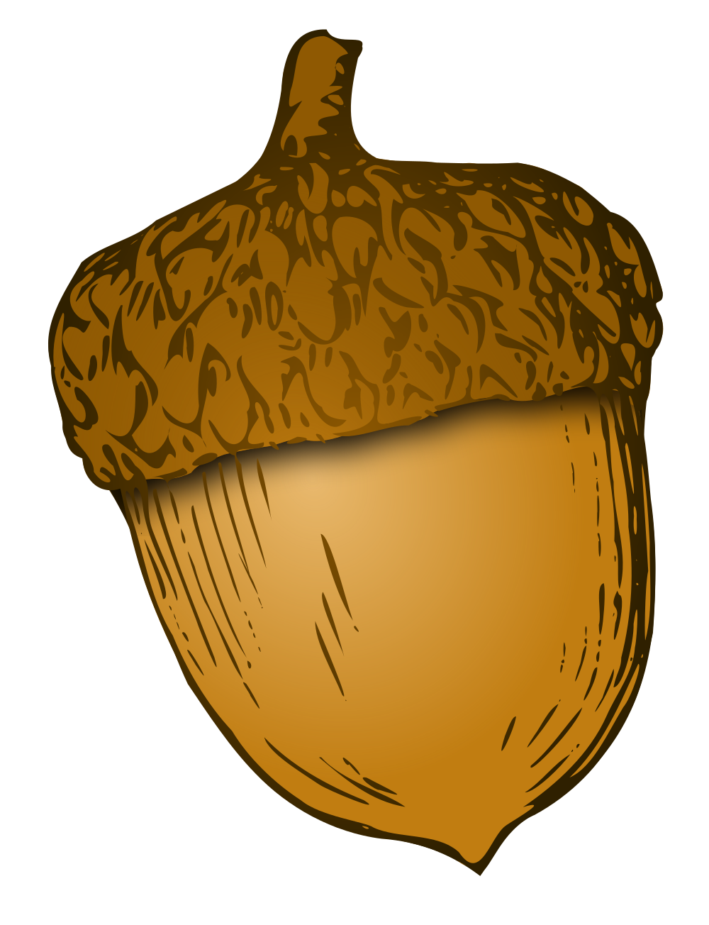 Acorn svg. File wikivoc wikimedia commons