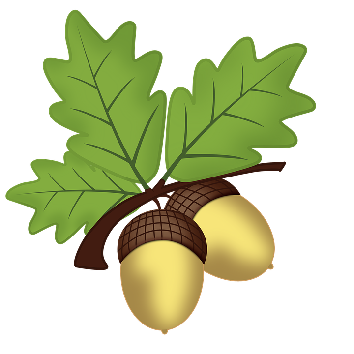 Acorn svg simple. Collection of free chincapin