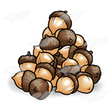 Acorn transparent cartoon pile. Png pictures free icons