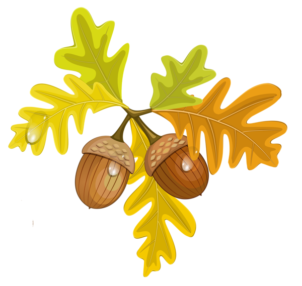 Acorn svg painting. Transparent fall leaves with