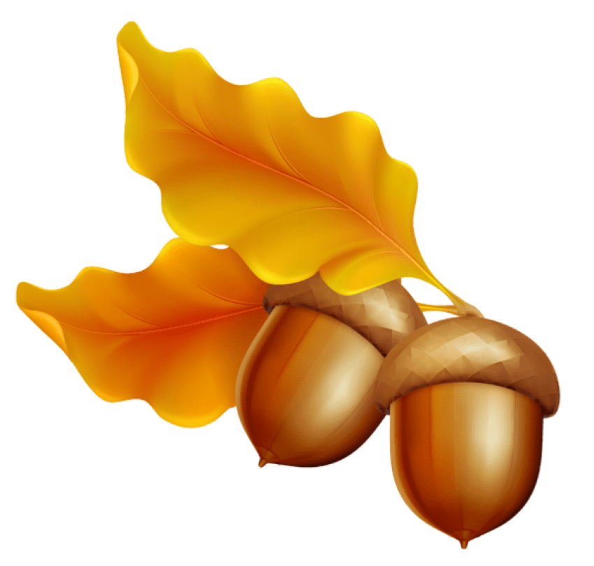 Acorn transparent color. Png free images toppng