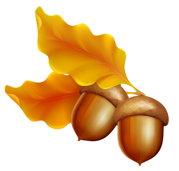 Acorn transparent leave. Gallery fall png