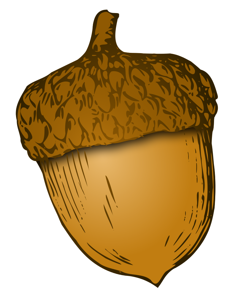 Acorn svg clip art. File wikivoc wikipedia filewikivocacornsvg