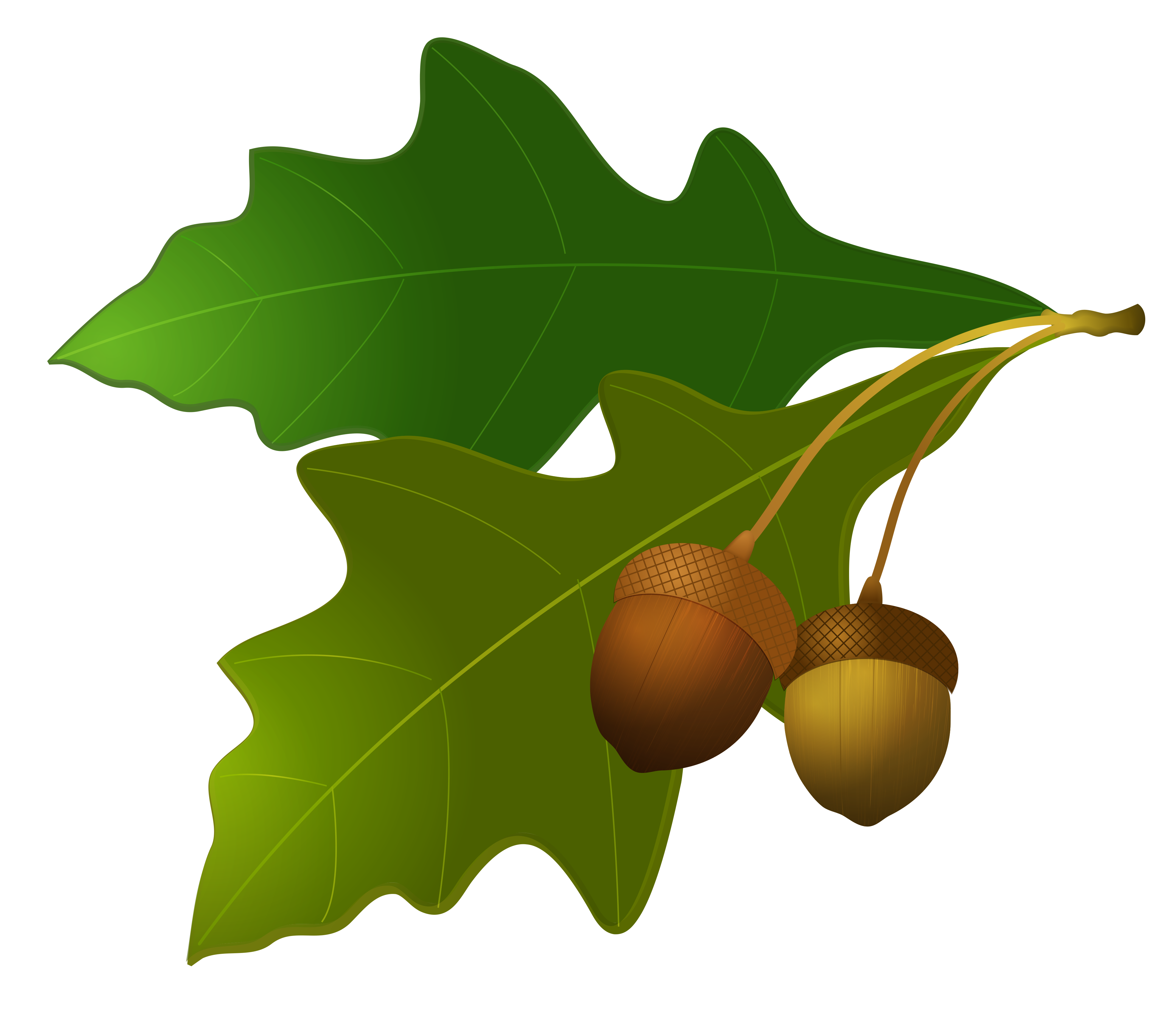 Acorn transparent oak leaves. With acorns gallery yopriceville