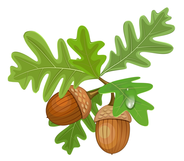 Acorn transparent printable. Leaves with acorns fonts