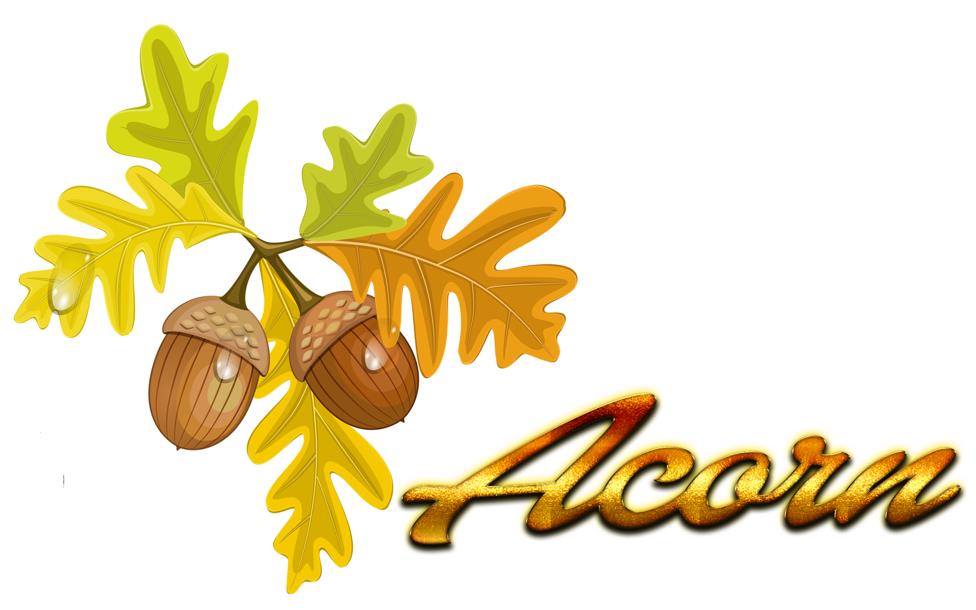 Acorn transparent fall leaves. Of the endless clipart