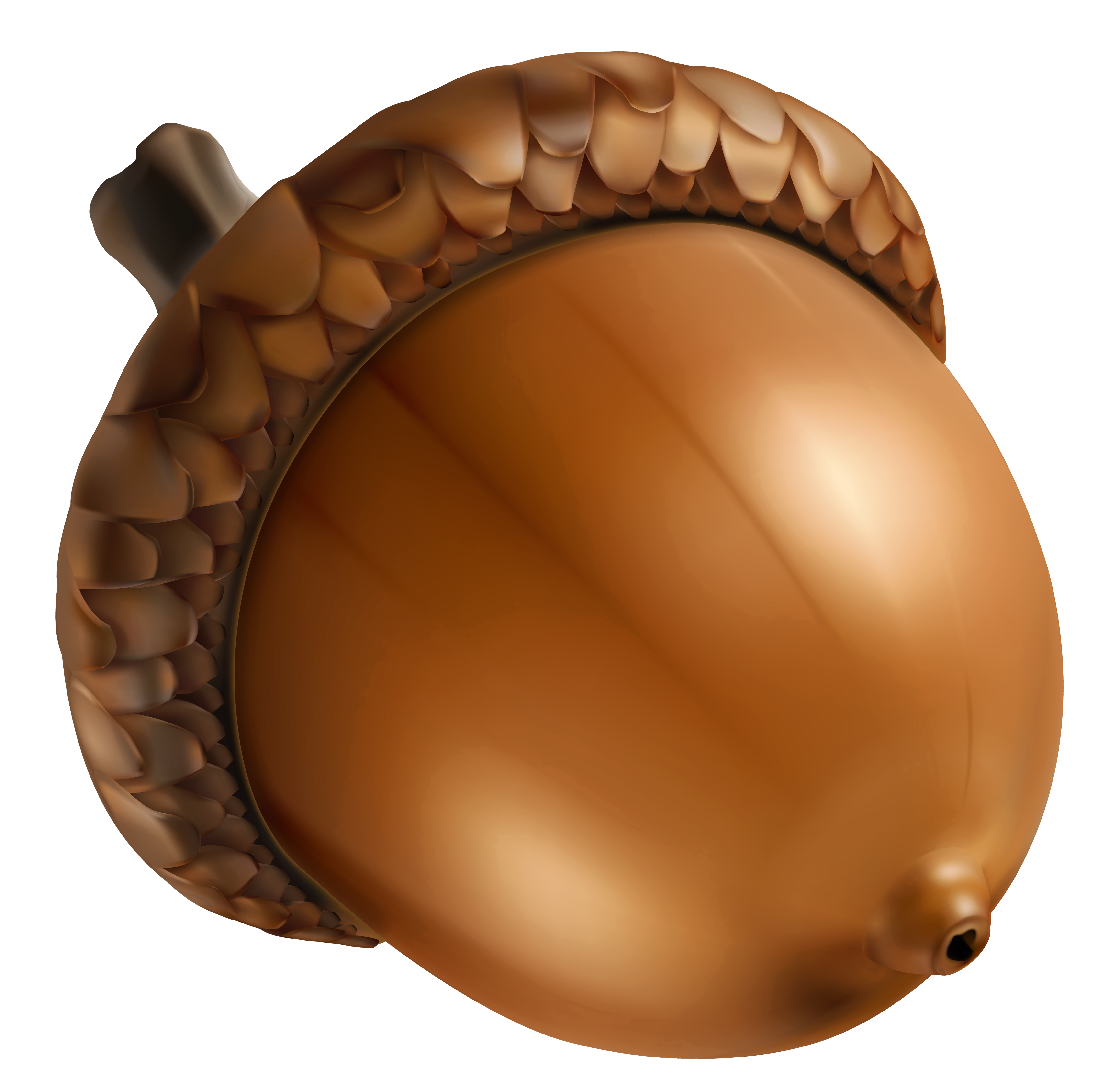 Acorn transparent thanksgiving. Png clipart image gallery