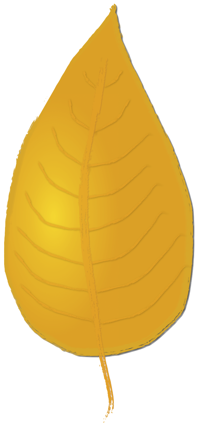 Acorn transparent thanksgiving. Leaves and acorns clipart