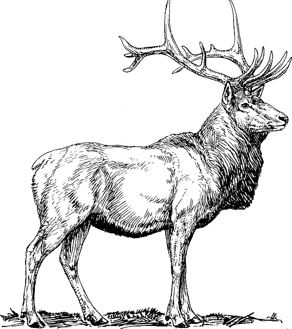 Dear drawing wildlife. Free image on pixabay