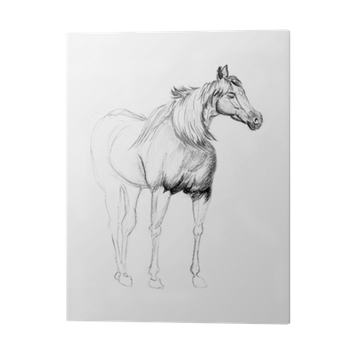 Acrylic drawing horse. Sketch print pixers we