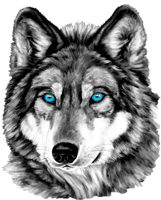 Drawing husky colored pencil. Painted wolf grayscale invitations