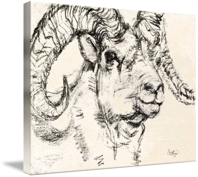 Sketch dall sheep ram. Drawing goats charcoal clip art transparent download