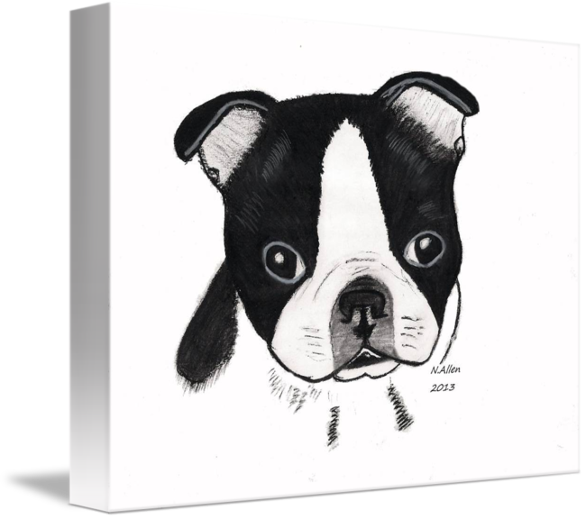 Acting drawing charcoal. Boston terrier puppy by
