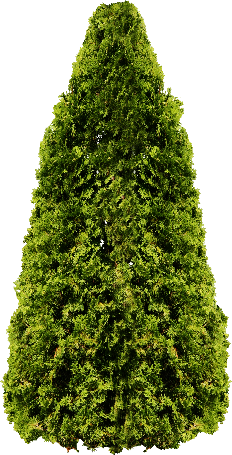 Trees plan png. Tree images pictures download