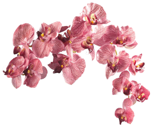 aesthetic flowers png