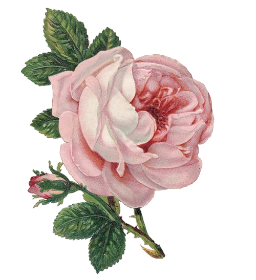 Flowers png tumblr. Transparent flower for your
