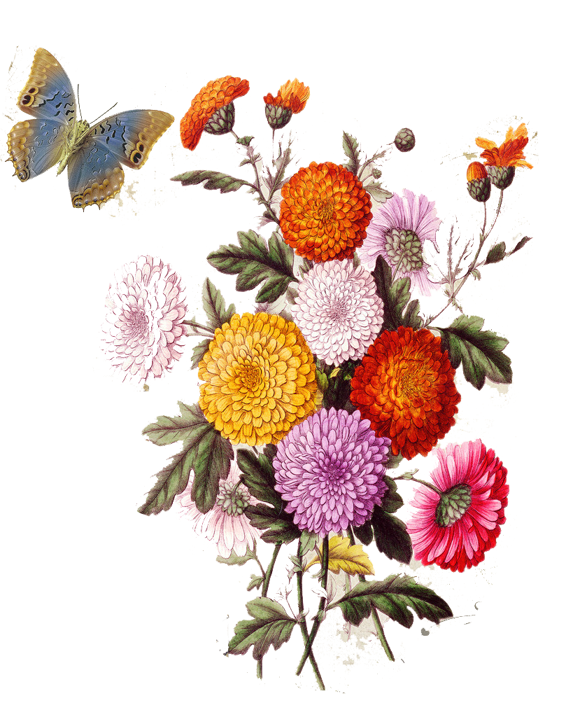 Aesthetic flowers png. Flower collage stock illustration