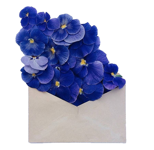 Aesthetic flowers png. Transparent discovered by frida