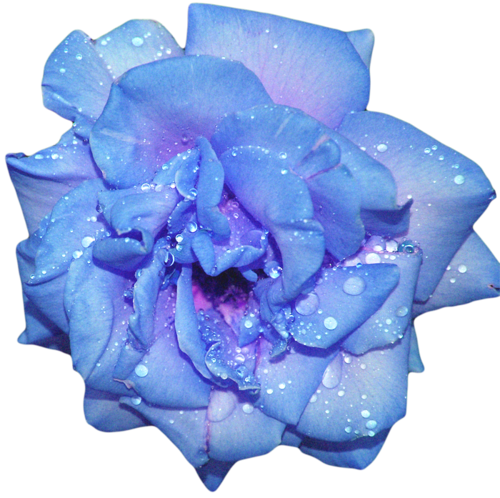 Aesthetic flowers png. Transparents tumblr google search