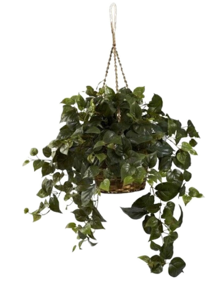 Aesthetic plant png. Green niche report abuse