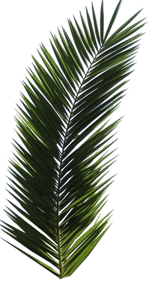 Aesthetic plant png. Image about in plants