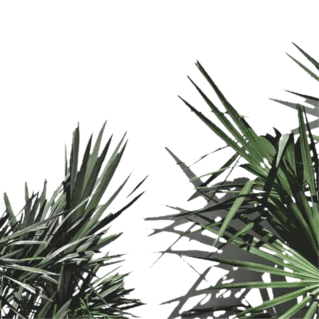 Aesthetic plant png. Leaves freetoedit