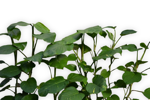 Aesthetic plant png. Images about green