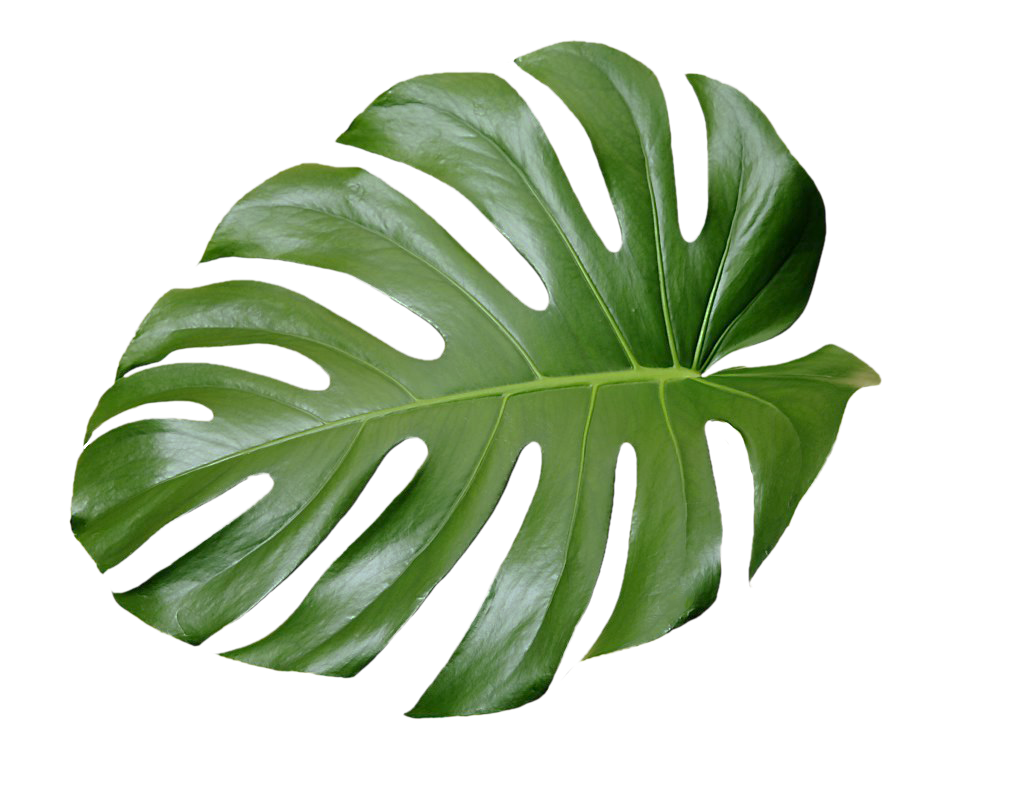 Tropical leaf png. Plant aesthetic ftestickers freetoedit